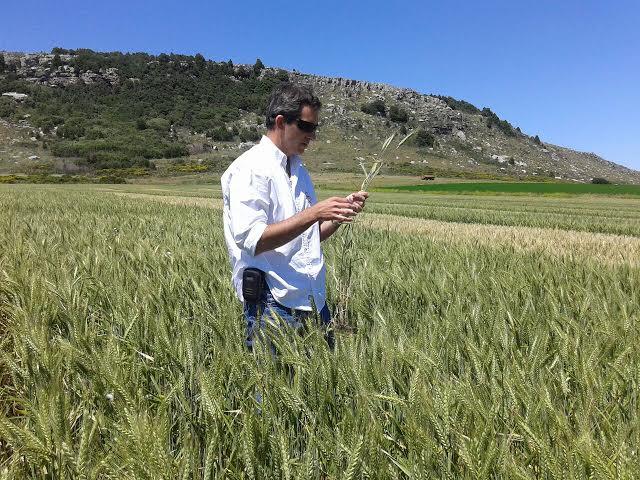Autor: Ing. Agr. Esteban Bilbao ATR Regional Aapresid Necochea, Asesor de Agroestudio Viento Sur SRL.