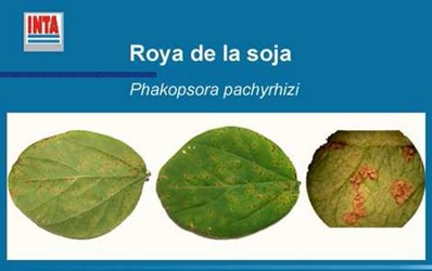roya de la soja